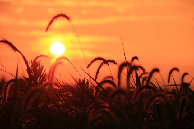 落陽 03