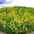 写真: 天空の花園
