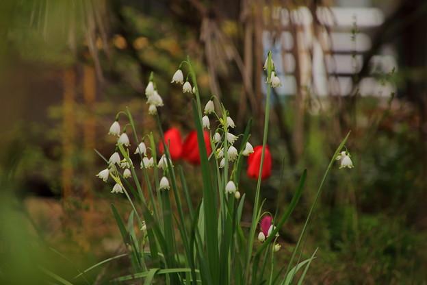 空き家に咲く