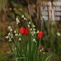 写真: 空き家に咲く