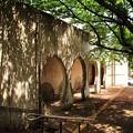 写真: 新緑の古城公園02