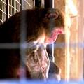 Photos: 猿生とは・・・