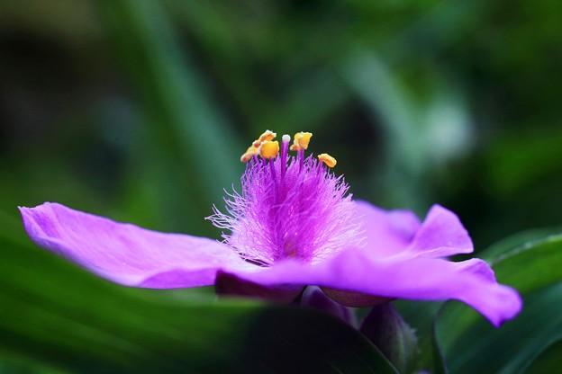 私の誕生花