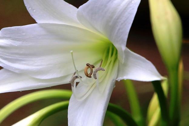 裏庭に咲く