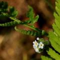 写真: 裏庭の小っちゃい花