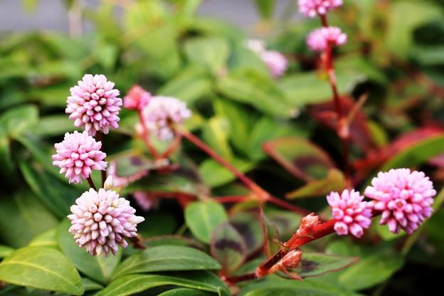庭の花01