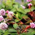 写真: 庭の花01