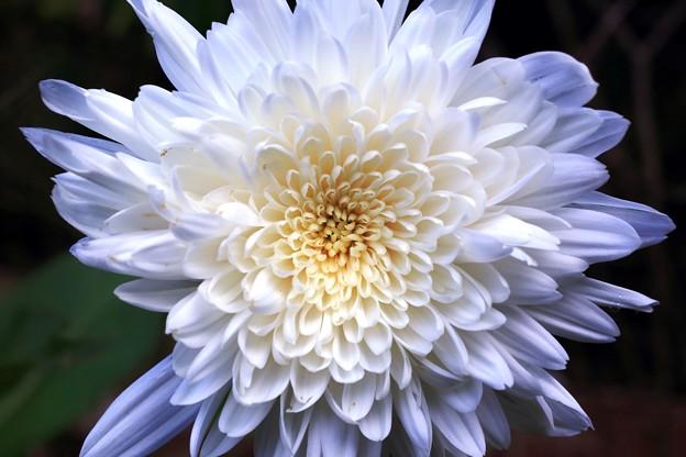 庭の花02