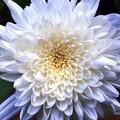 写真: 庭の花02