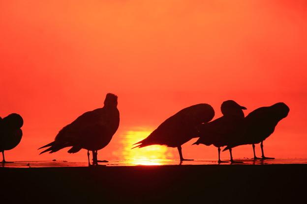 海鳥達の朝