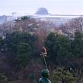 Photos: 金鵄にトンビ