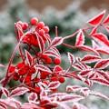 Photos: 凍てつく朝 02