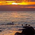 海鳥たちの夕暮れ