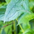 Photos: 蜘蛛さん