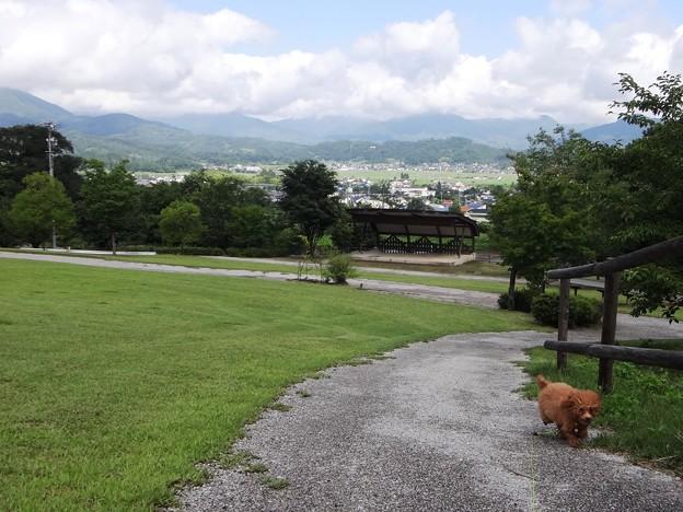 山王山公園a