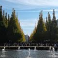 Photos: 明治神宮外苑いちょう並木の紅葉2018噴水からの眺め