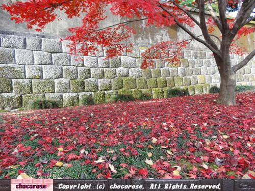 緑の下草と真っ赤な紅葉