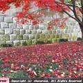 Photos: 緑の下草と真っ赤な紅葉