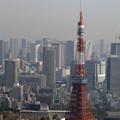 Photos: 六本木ヒルズからの眺め