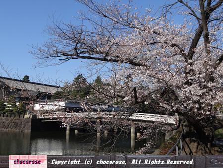 桜越しの皇居平川門