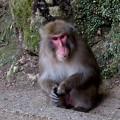 Photos: 滝道のお猿さん
