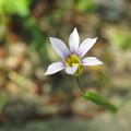 写真: 道端のお花たち