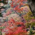 Photos: 滝道の紅葉