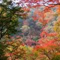 滝道の紅葉