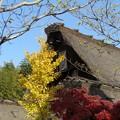Photos: 茅葺き屋根と紅葉