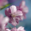 Photos: 送春花 05