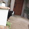 犬@起きている180619