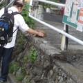 写真: 老猫@可愛がり180721