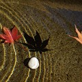 Photos: 秋の影