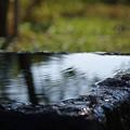 写真: 湧き水