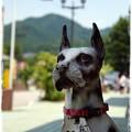写真: 番犬3