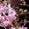 写真: 春に浮かれて