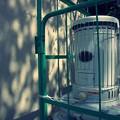写真: 檻の中