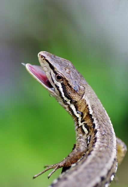 写真: Jurassic Park