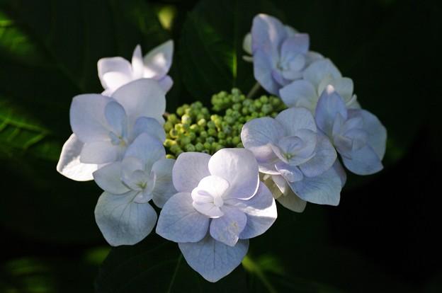 花の首飾り