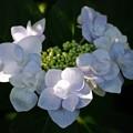 写真: 花の首飾り