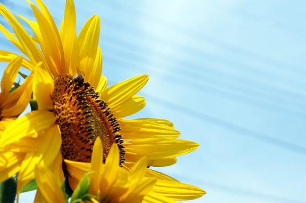 写真: 見上げる太陽
