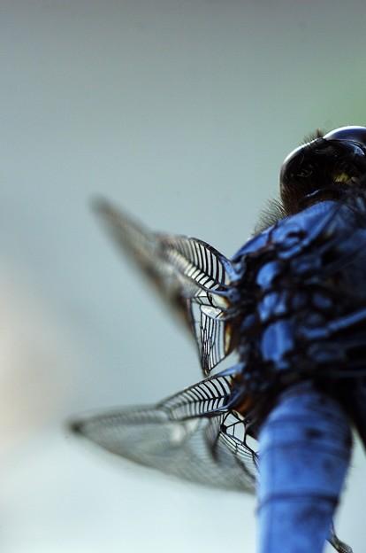 写真: 羽根を持つ奴