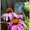 写真: 庭の飾り