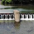 写真: 堰を求めて