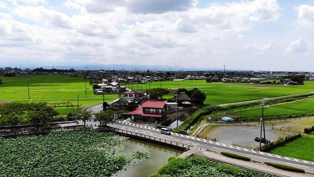 写真: 田んぼ
