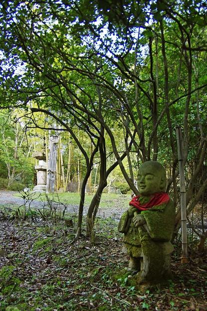 写真: 苔のむすまで