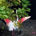 写真: 赤い羽