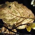 大きな葉っぱの影で・・・