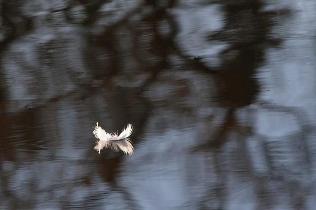 天から落ちて来た羽