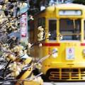 Photos: 蝋梅のある景色